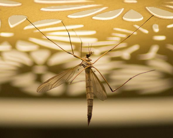 crane fly photography claire harrison art