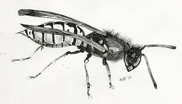 wasp nature insect claire harrison art