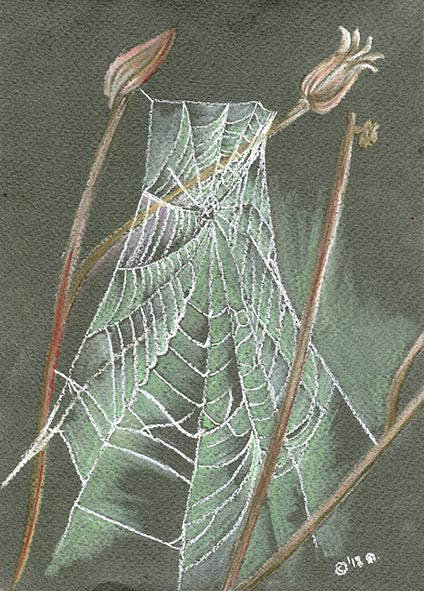 spiders web drawing pastel