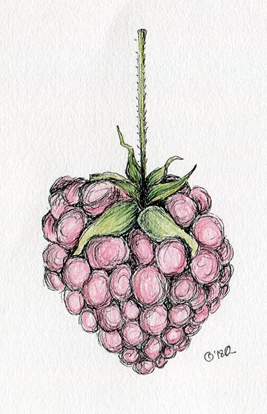 raspberry coloured pencil drawing