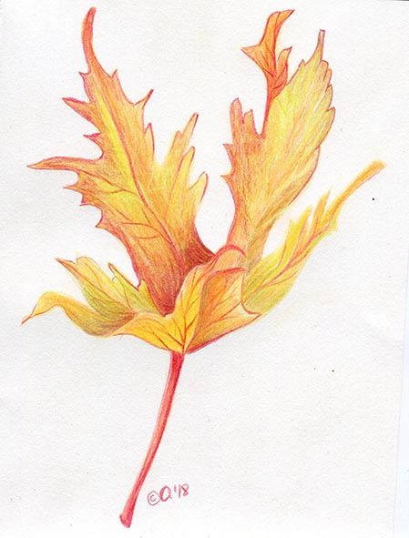 autumn leaf coloured pencil drawing