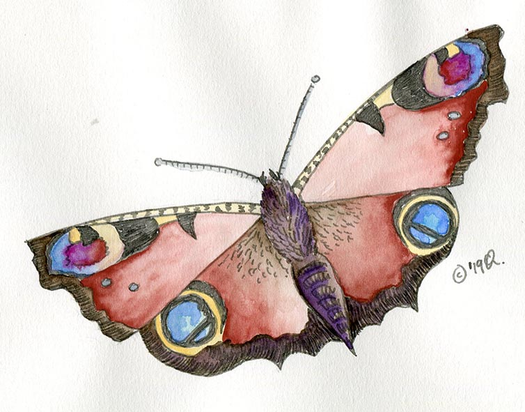 peacock butterfly drawing