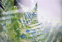 white and blue fern