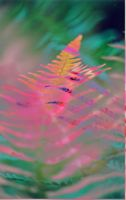 green and pink fern