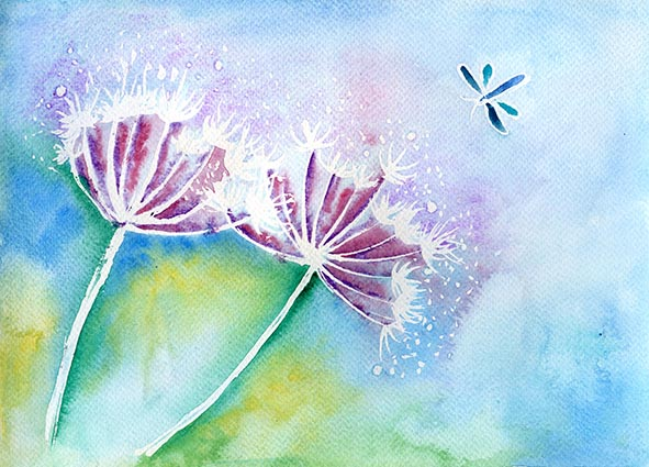 hogweed dragonfly watercolour