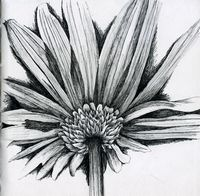 back of daisy pen and ink flower